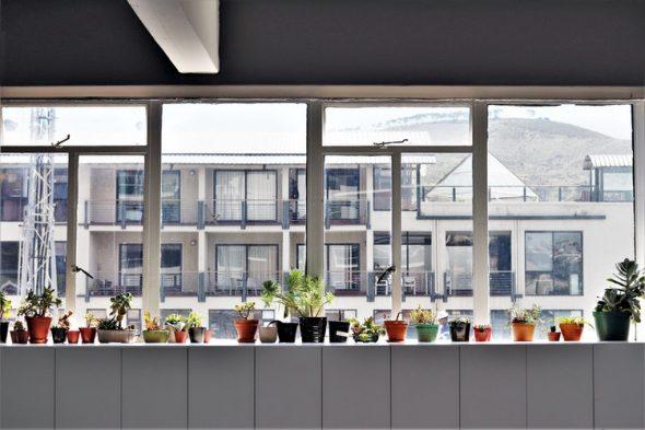 As plantas ideais para ter em casa