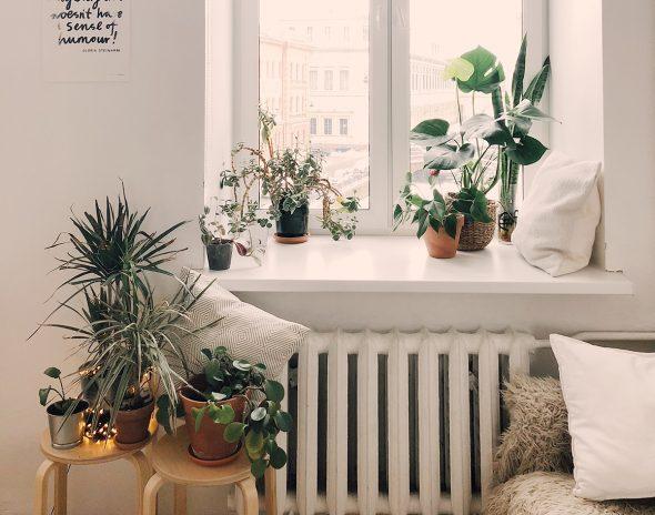 As plantas ideais para ter na sua casa